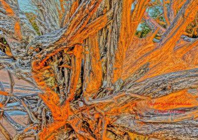 Driftwood Afire