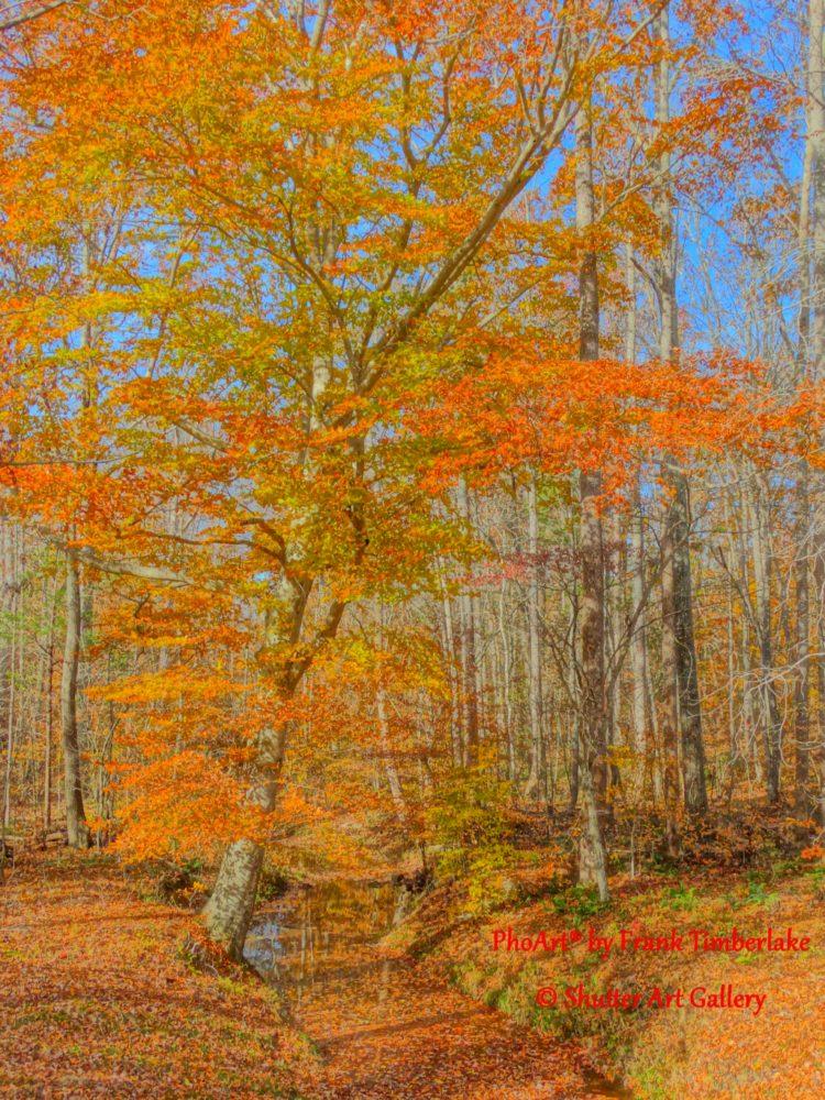 Persimmon Tree Branch - Award-winning Timberlake artwork